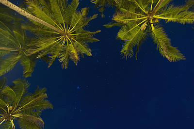 Simple Beauty In Colors Photograph - Stars At Night With Palm Tree Thalpe by Ian Cumming