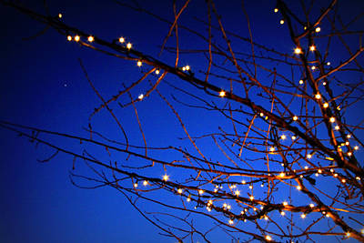 Art Print featuring the photograph Stars On Branches by Aurelio Zucco