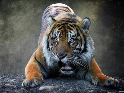 Photograph - Startled Tiger by Steve McKinzie