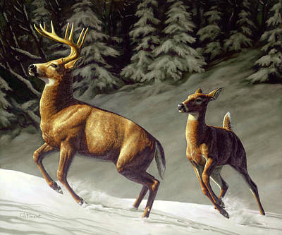Whitetail Deer Wall Art - Painting - Startled - Variation by Crista Forest