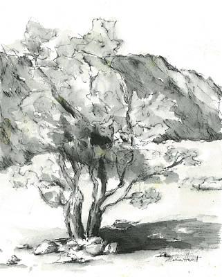 Desert Scene Painting - Stately Smoketree by Maria Hunt