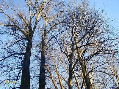 Photograph - Stately Trees 1 by Sadie Reneau
