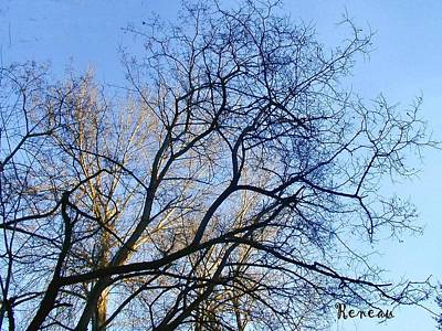Photograph - Stately Trees 2 by Sadie Reneau