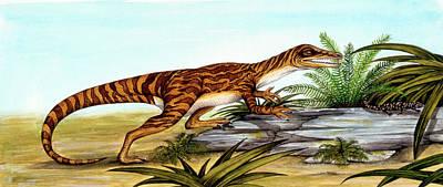 Paleozoology Photograph - Staurikosaurus Dinosaur by Deagostini/uig