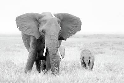 Baby Elephant Wall Art - Photograph - Stay Away! by John Fan
