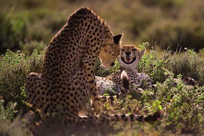 Cheetah Wall Art - Photograph - Stay Away by Mohammed Alnaser