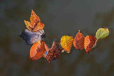 Photograph - Staying Together In Autumn by Gary Slawsky