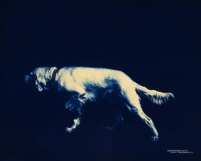 Canine Digital Art - Steady by Georgia Fowler
