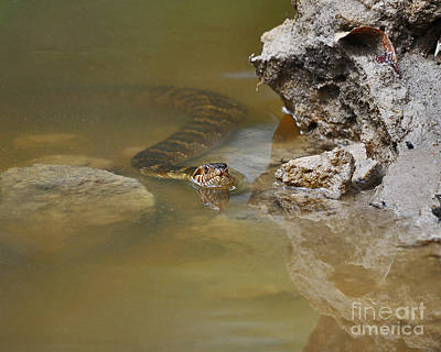 Photograph - Stealthy Snake by Al Powell Photography USA