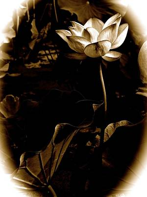 Photograph - Steampunk Lotus by Larry Knipfing