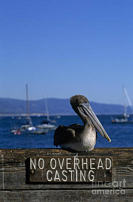 Photograph - Stearns Wharf With Pelican by Jim Corwin