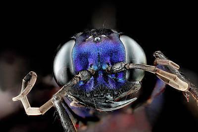 Metallic Blue Photograph - Steel Blue Cricket Hunter by Us Geological Survey