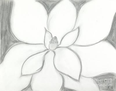 Magnolia Flower Drawing - Steel Magnolia  by Katy  Scott