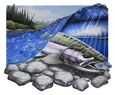 Fine Drawing - Steelhead Dreams by Nick Laferriere