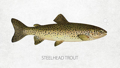 Fish Species Digital Art - Steelhead Trout by Aged Pixel