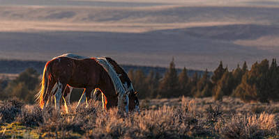 Photograph - Steens Sundown by Wes and Dotty Weber