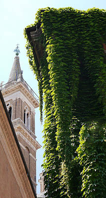 Photograph - Steeple And Ivy by Herb Paynter