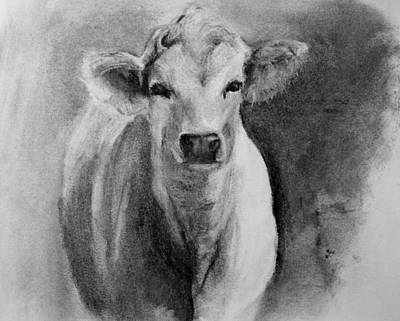 Drawing - Steer- Drawing From Life by Michele Carter