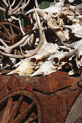 Steer Skulls And Antlers Art Print