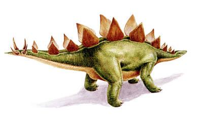Dinosaur Photograph - Stegosaurus Dinosaur by Deagostini/uig