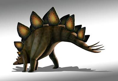 Stegosaurus Dinosaur Art Print