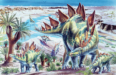 Stegosaurus Dinosaurs Art Print