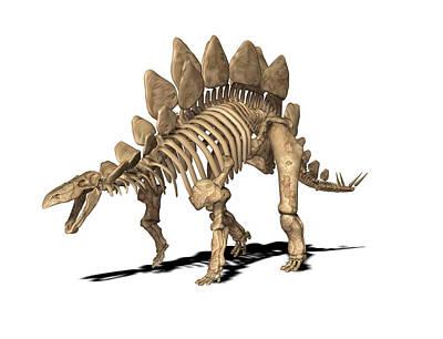 Stegosaurus Skeleton Art Print