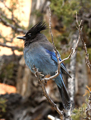 Photograph - Stella's Jay-bryce Canyon by Butch Lombardi