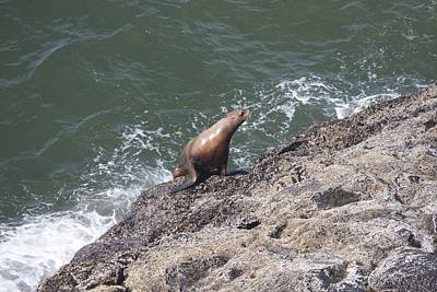 Photograph - Steller Sea Lion - 0028 by S and S Photo