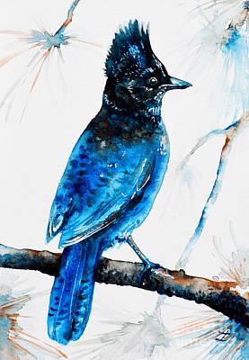 Painting - Steller's Jay by Zaira Dzhaubaeva