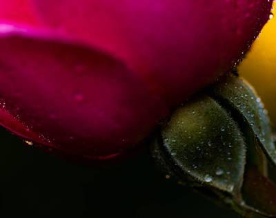 Photograph - Stem by Haren Images- Kriss Haren