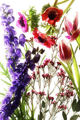 Photograph - Stems And Petals  by Selke Boris