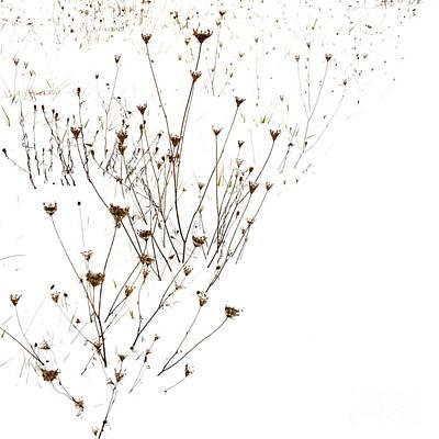 Stems In Snow Art Print by Bernard Jaubert