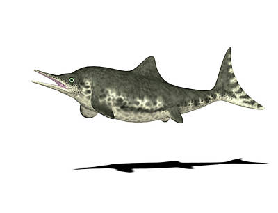 Paleozoology Photograph - Stenopterygius Prehistoric Marine Reptile by Friedrich Saurer