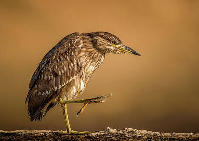 Heron Photograph - Step By Step by Faisal Alnomas