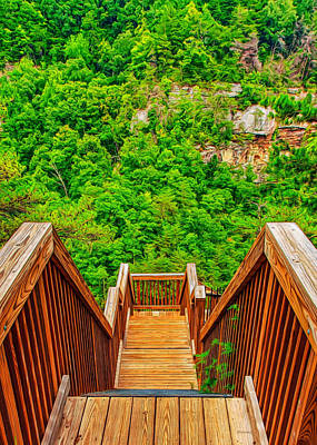 Forest Photograph - Stepping Down Into Cloudland by John M Bailey