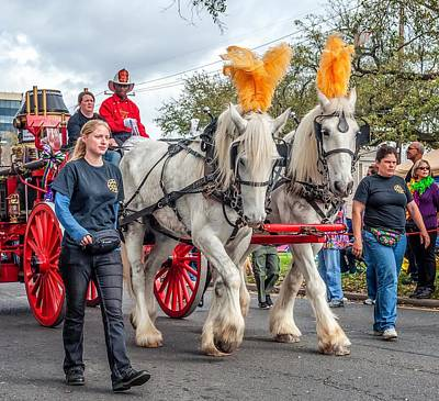 Clydesdale Photograph - Stepping Out by Steve Harrington