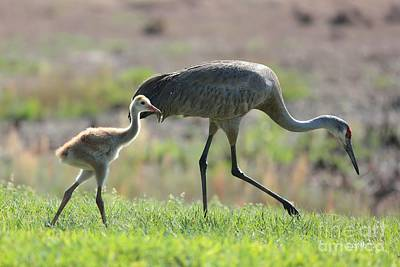 Baby Bird Photograph - Stepping Out With My Baby by Carol Groenen
