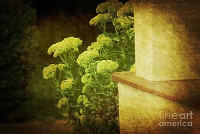 Art Print featuring the photograph Steps by Rosemary Aubut