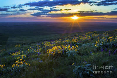 Photograph - Steptoe Sunset by Sonya Lang