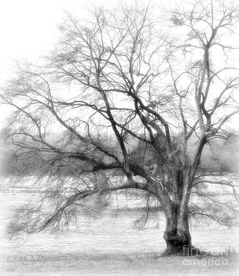 Photograph - Sterling Fog by Cris Hayes