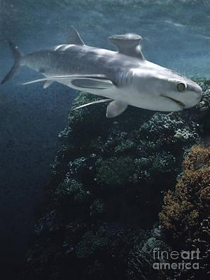 Stethacanthus Shark Swimming Art Print by Jan Sovak
