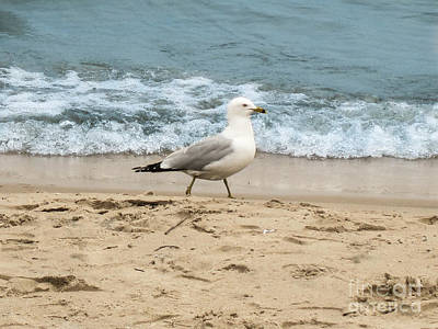 Photograph - Steven Seagull by Casey Tovey And Sherry Lasken