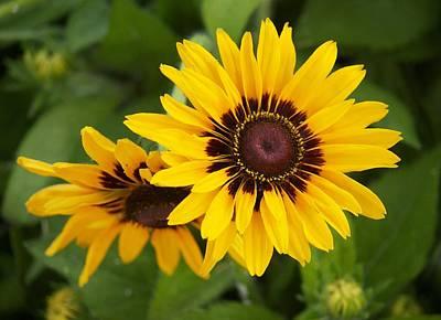 Steve's Sunflower Art Print by Bonita Hensley