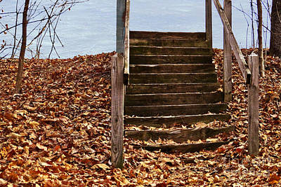 Photograph - Stairs In The Woods by Dawn Gari