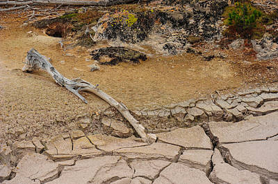 Photograph - Stick In The Mud by Harry Spitz