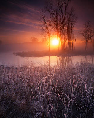 Sticks Of Frost Art Print by Ray Mathis