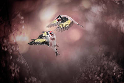 Flying Photograph - Stiglitz by Doris Reindl