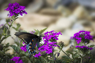Photograph - Still Beautiful Swallowtail by Penny Lisowski