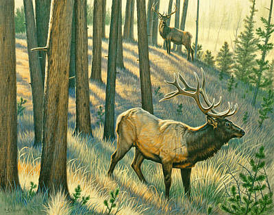 Elk Painting - Still Champiion by Paul Krapf